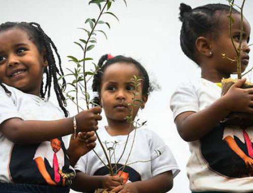 Etiyopya'da bir günde 350 milyon ağaç dikildiği belirtiliyor